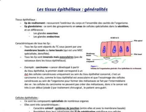 Cours PACES 2018-2019